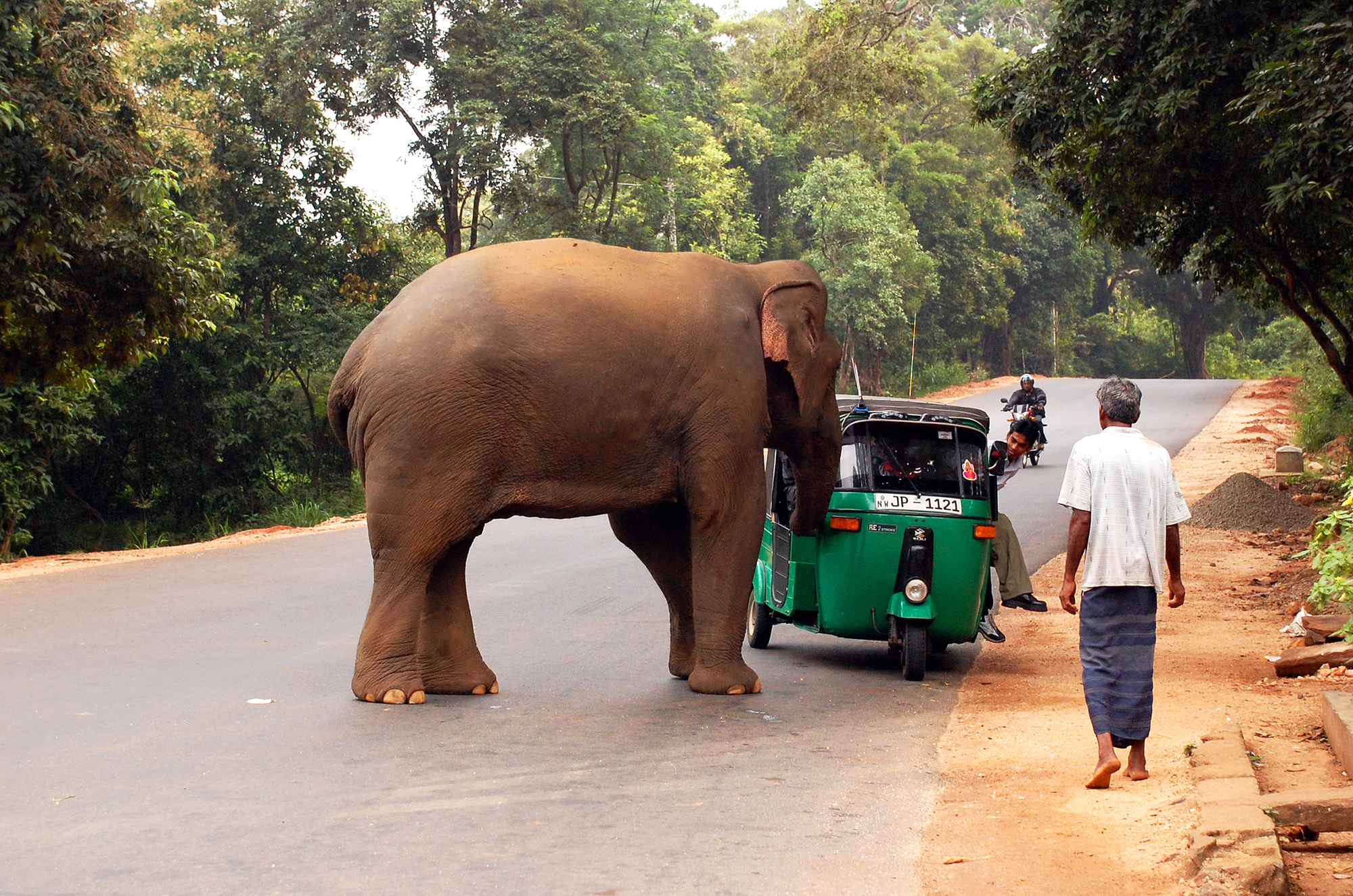 Elephant Attacking a 3-wheeler : Elephants attack