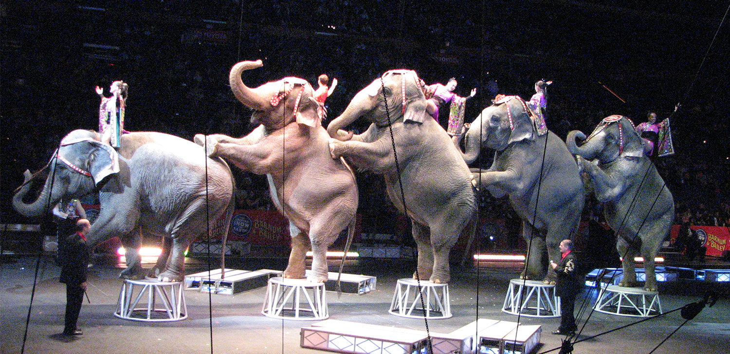 Circus Elephants: Elephant Entertainment