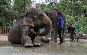 Kuala Gandah Elephant Conservation Centre, Malaysia: Elephant Sanctuaries