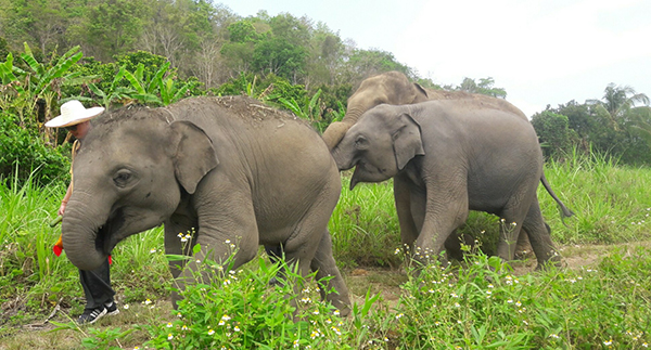 Elephant Nature Park: Elephant Sanctuaries Worldwide