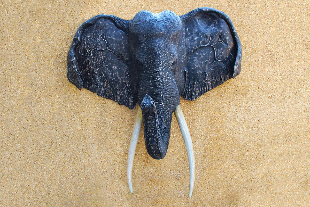 Elephant Head On A Wall ; elephant trophy hunting
